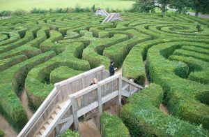 A large garden maze
